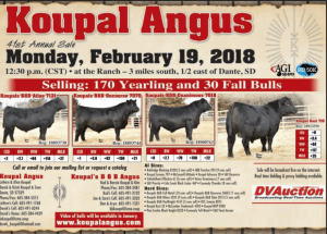 Koupal Angus 41st Annual Sale @ At the ranch | Dante | South Dakota | United States
