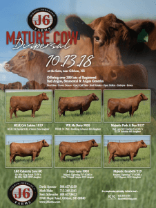 J6 Farms Mature Cow Dispersal @ At the farm | Gibbon | Nebraska | United States