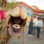 Camel on Tour