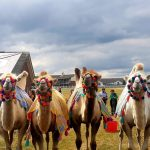 Camel Experience