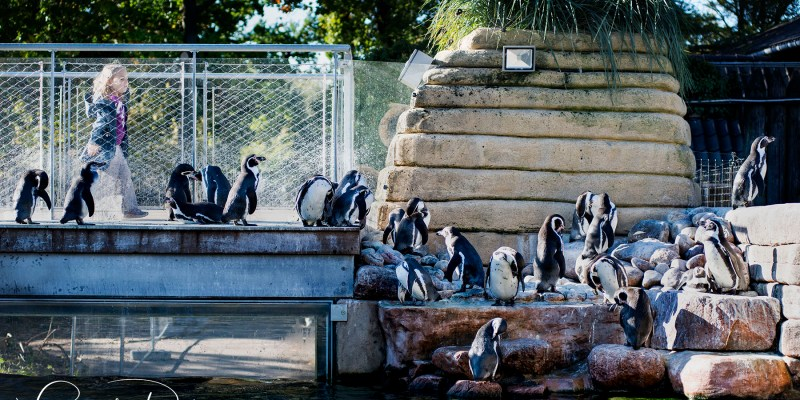 Zoo Zoo in Copenhagen…