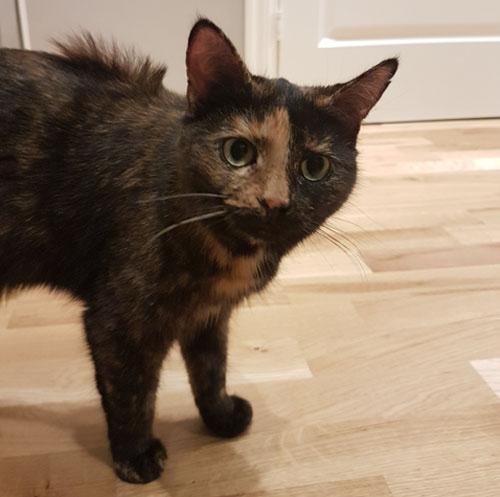 Fotografi från sidan på katten Sessan, vars päls står upp på ryggen.