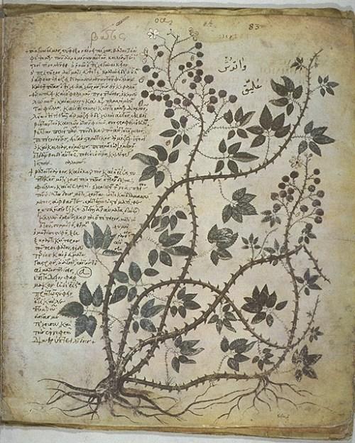 En gulnad boksida som visar en slingrande växt med bär samt handtextad skrift.