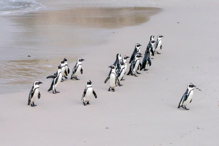 penguin-1719608