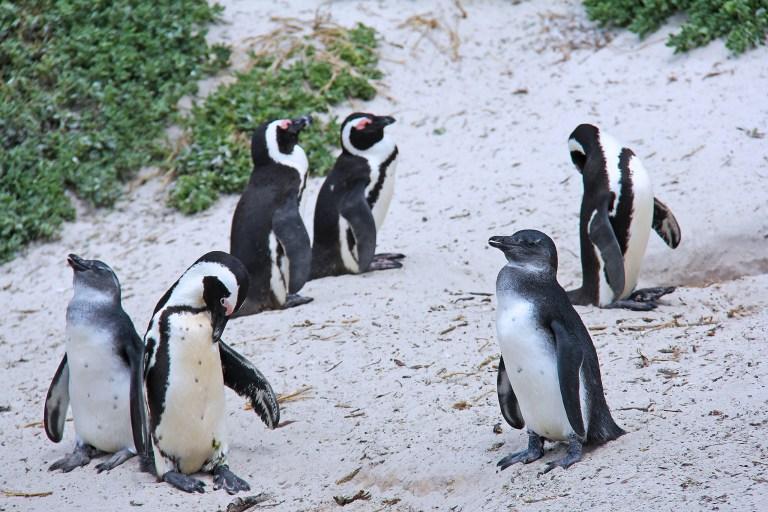 penguins-1219217