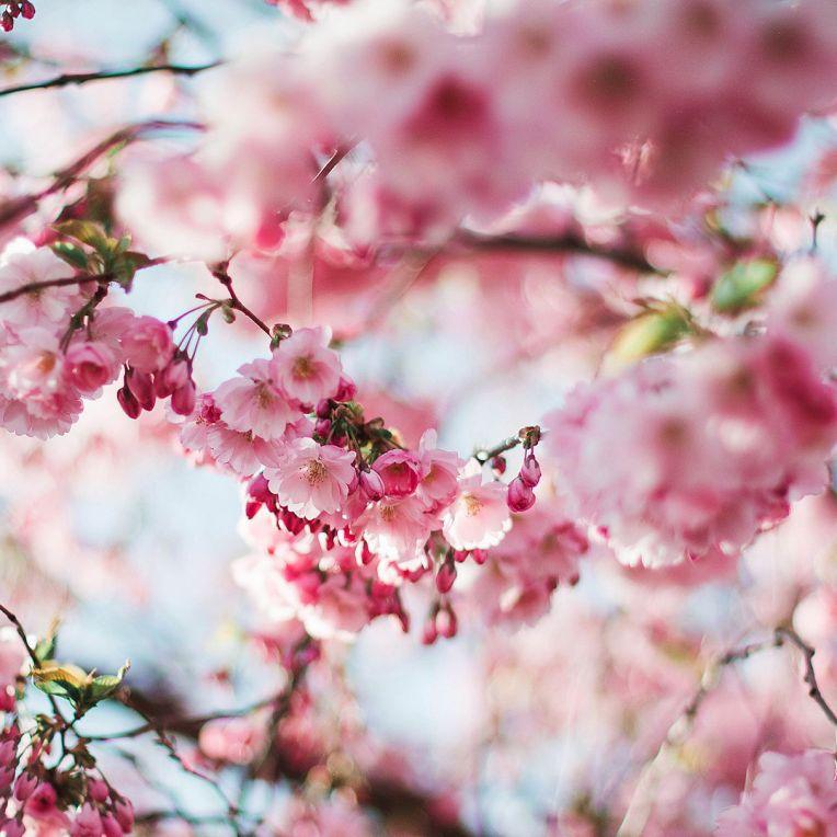 bloom-blossom-flora-112141