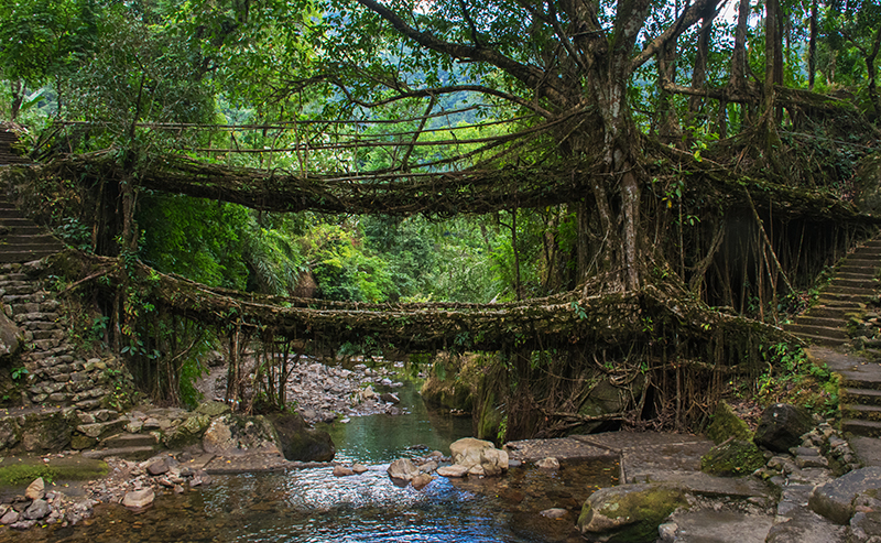 The marvel - Double decker root bridge