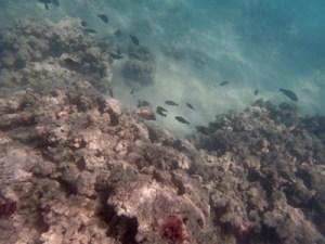 Snorkelling at Waikoloa Beach