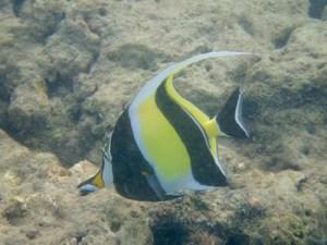 Hanauma Bay snorkelling, Oahu