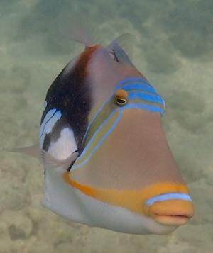 Hawaii Snorkeling Hotspots