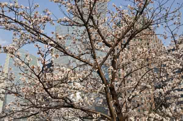 Places to Visit in Seoul During Spring