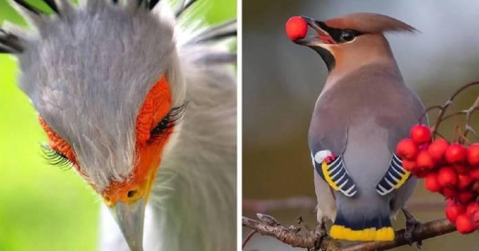 20 de păsări maiestuoase și unice care uimesc oamenii cu frumusețea lor