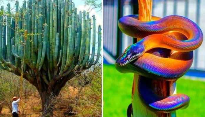 18 imagini fascinante care ilustrează natura așa cum n-ai mai văzut-o niciodată