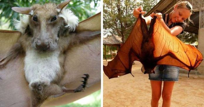 16 specii de lilieci care arată ca niște monștri fictivi