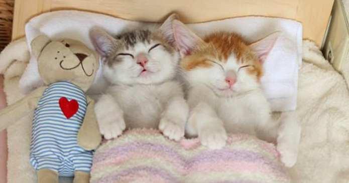 Un om cu suflet mare găsește pisicilor fără adăpost locul perfect pentru a dormi. Câți ar face la fel?