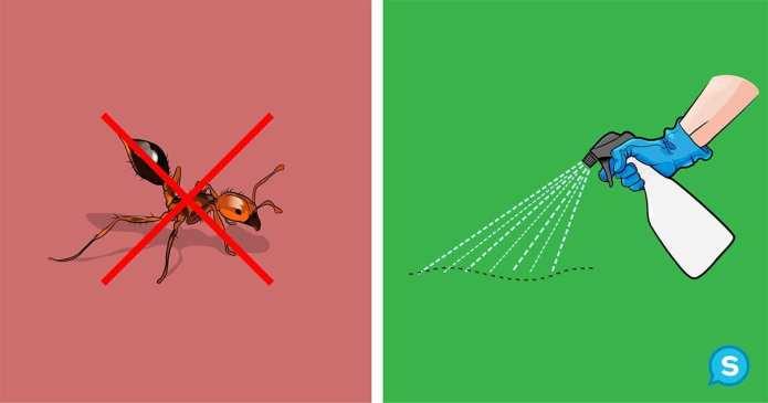 Soluții ingenioase pentru a scăpa de insectele din casă