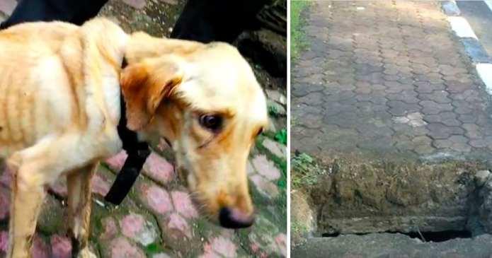 Este uimitor ce au făcut acesți oameni pentru a salva un câine abandonat. Pâna la urmă trebuie să nu uităm că toți avem suflet!
