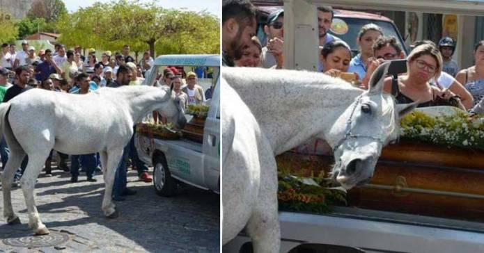 Acest cal s-a apropiat de sicriul stăpânului său pentru a-şi lua rămas-bun