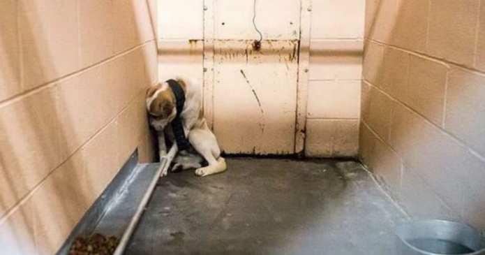 Povestea incredibilă a acestui câine abandonat care era prea speriat să se apropie de cineva. Ce noroc că l-a găsit un iubitor de animale!