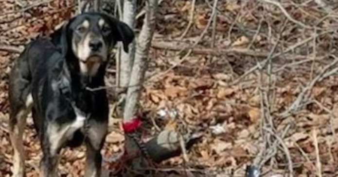 Un câine a fost găsit părăsit într-o pădure, având cu el cu bilet emoționant