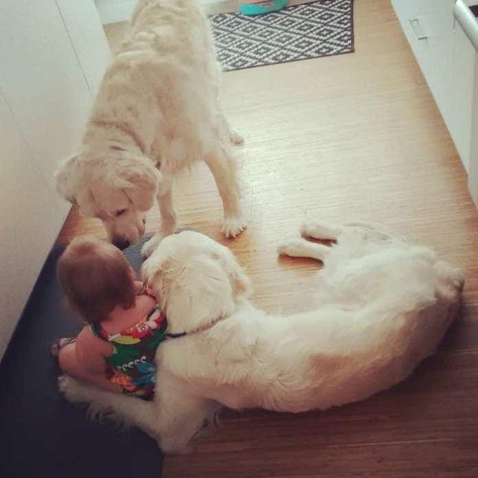 Părinții nu-și pot crede ochiilor după ce au văzut ce au inregistrat camerele de securitate: câinii ajută un copil mic să iasă din cameră pentru a primi gustări