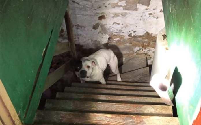Un bărbat care sa mutat într-o casă nouă găseşte la subsol un câine iar reacția lui spune totul