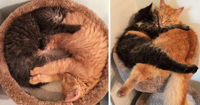 Înainte și după – poze cu animale care au crescut împreună
