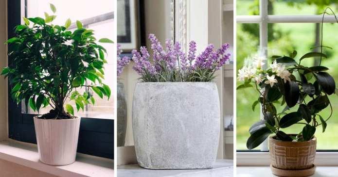 9 plante pentru dormitor care vă ajută să dormiți mai bine.Incercați aceste sfaturi!