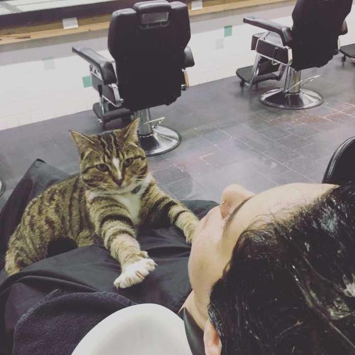 """Kitty """"lucrează"""" la coafor de peste 4 ani și niciodată nu a avut o zi liberă!"""