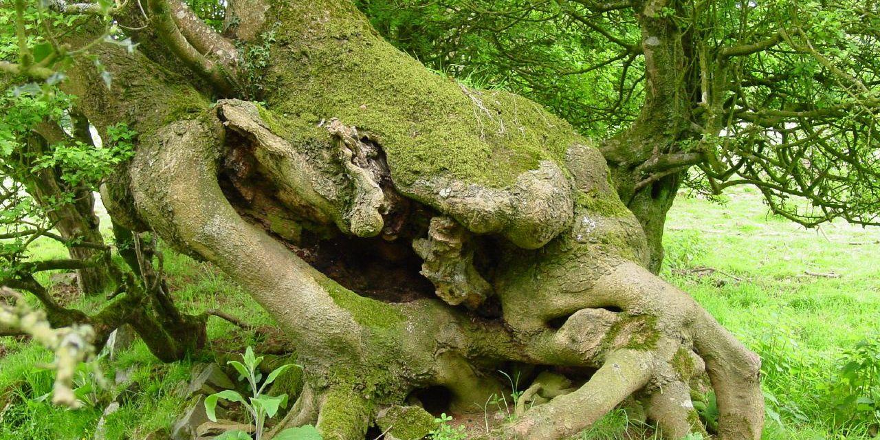 I Love A Tree