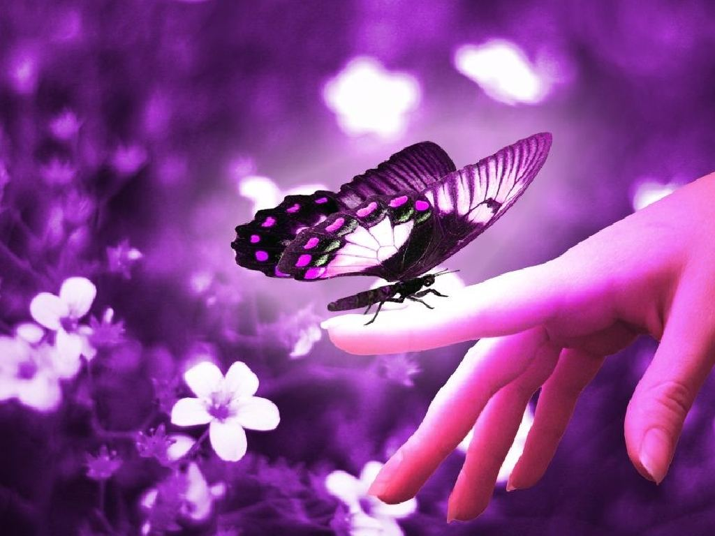 Purple-Butterflies-butterflies-35243885-1024-768