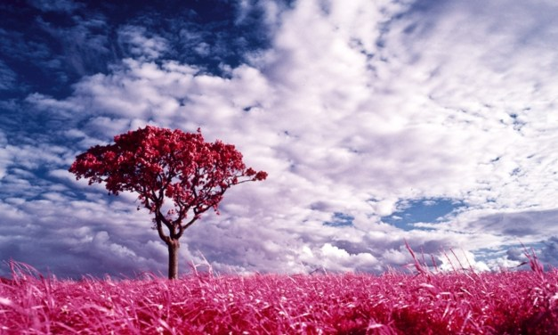 The Color Wheel … the Eternal Allure of Pink