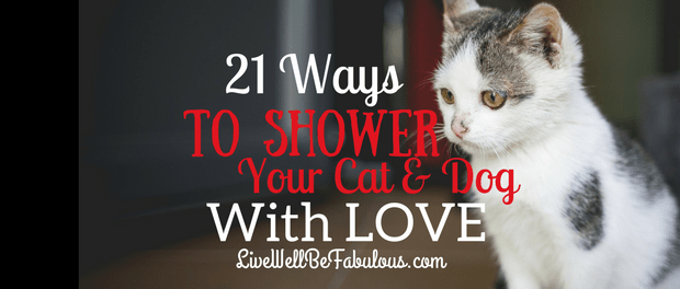21 Ways To Shower Your Cat And Dog With Love