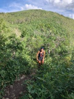 Wastach 100-Bree Trail