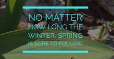 No matter the winter spring is sure to follow