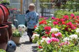 little boy walking through garden center
