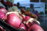 glen arbor farmers market up close produce onions