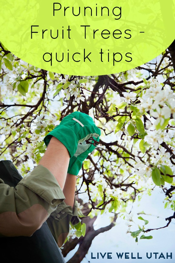 how to prune fruit trees - LiveWellUtah.org