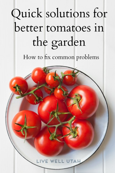 problems with tomatoes and solutions - LivewellUtah.org