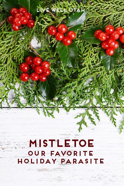 Mistletoe: Our Favorite Holiday Parasite   Live Well Utah
