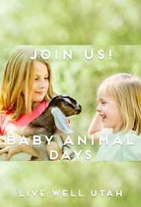 Baby Animal Days Blog