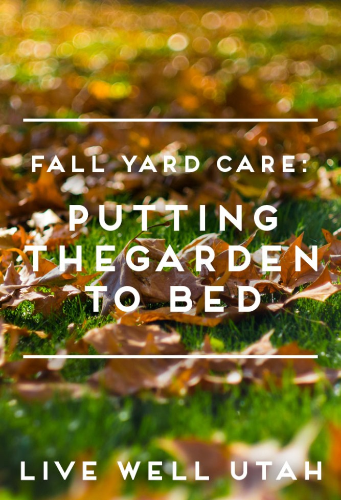Putting the Garden to bed.jpg