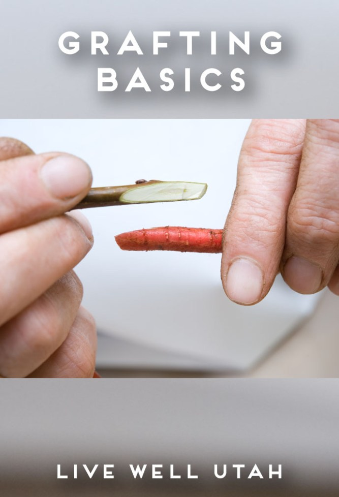 Grafting Basics