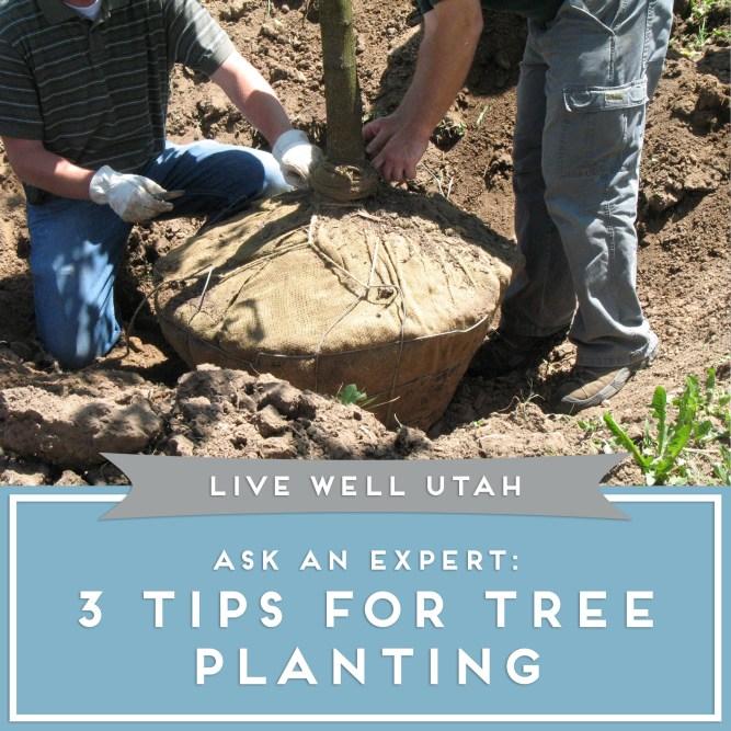 Tree Planting Tips.jpg
