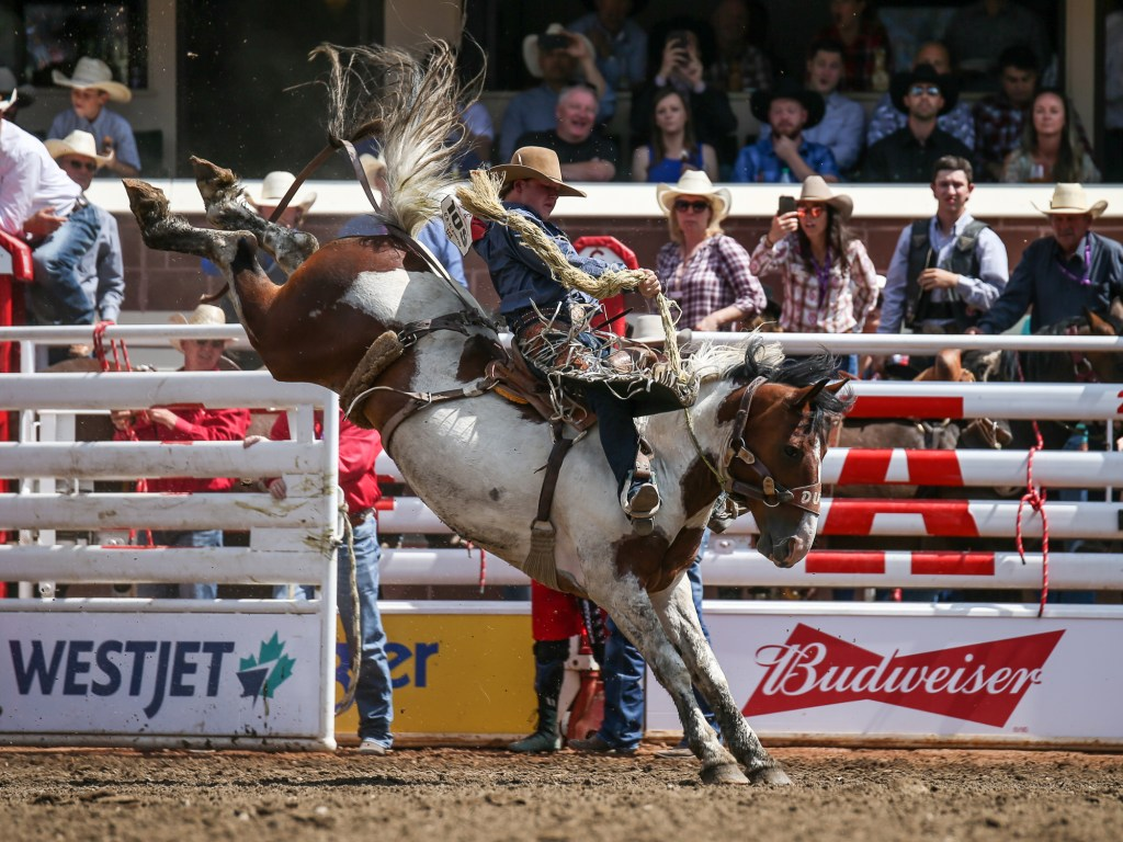 Photos Calgary Stampede 2019 Rodeo Day 6 7 Livewire