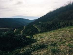 Field in Appalachia