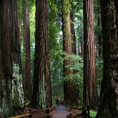 Muir Woods National Monument, Ca.