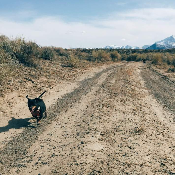 Linus running on a track around Mono Lake, California 2015