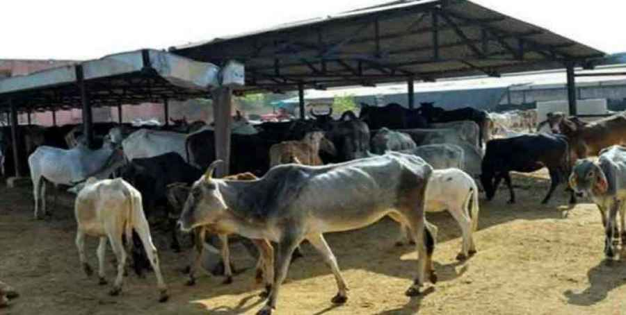 Government's new scheme cowshed Gaushala open