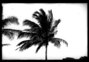 palm 2